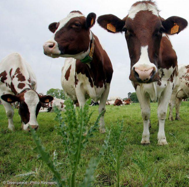 Dauerbrenner: Fleisch essen – ja oder nein?