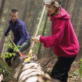 bergwaldprojekt.de