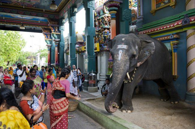 Verehrt und gequält: Tiere in Indien