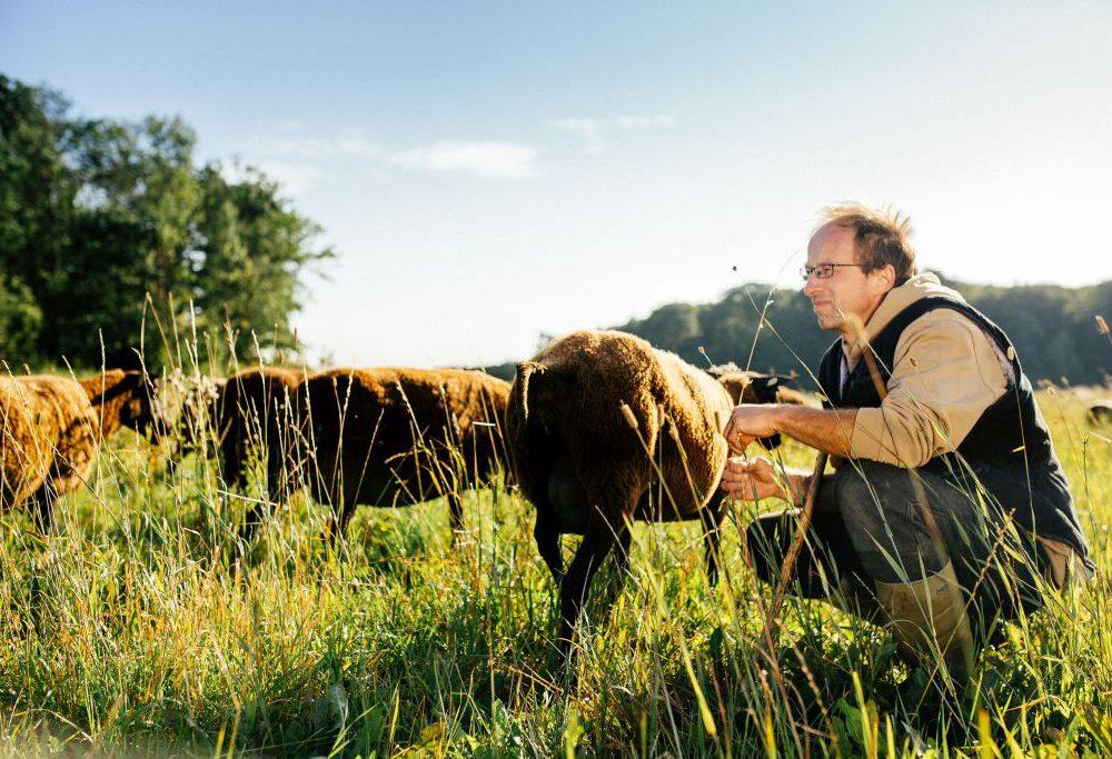 Vom Fotografen zum Schafbauer