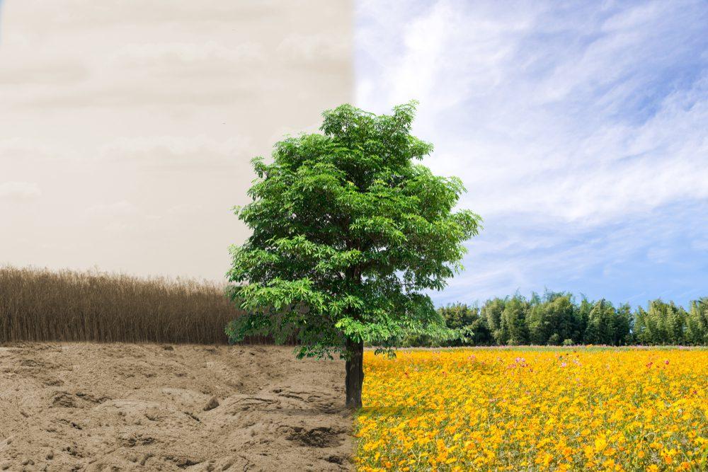 Für einen ökologischen Grundvertrag