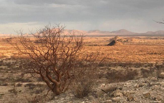 Die große Dürre in Nambia