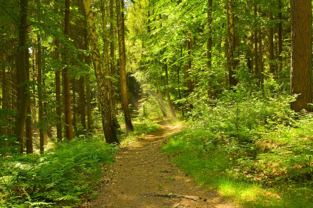 Wälder unter Druck